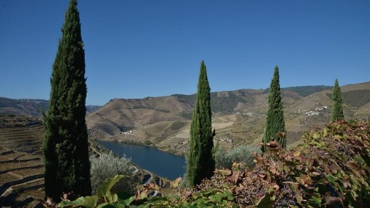 Douro Wine Tour - Dia Inteiro