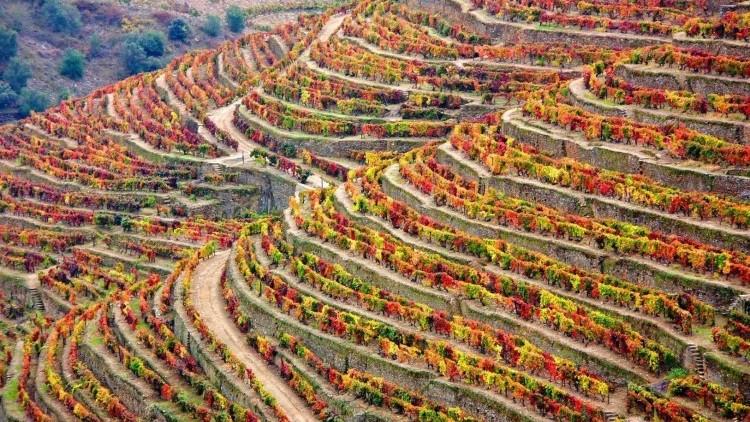 Douro Wine Tour - Full Day